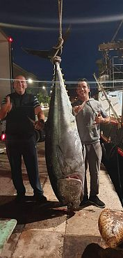 Catches of heavy tuna in Croatia